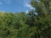 paysageclematitew
